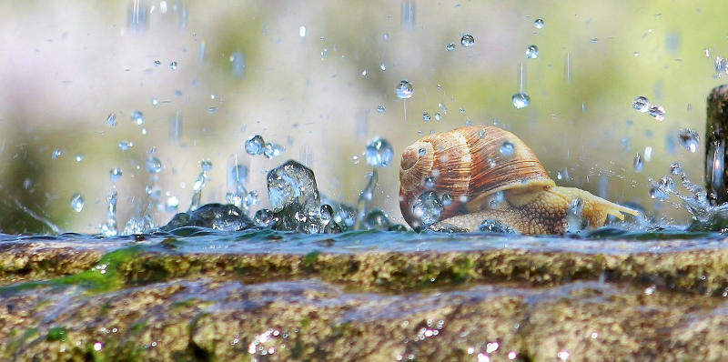 A picture of a snail being attacked by rain droplets